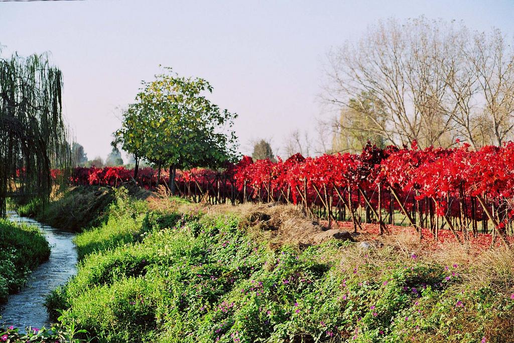 Ruta del Vino en Chile